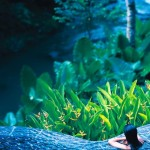 Maya Ubud – Oáza klidu a relaxace